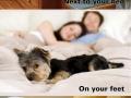 Evolution of pet sleeping