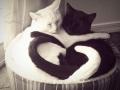 So much love