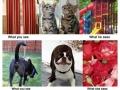 You vs. Animals