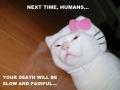 Wait for my revenge, humans!