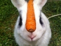 Master of self-control rabbit