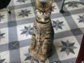 Calm cat is calm