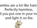 Cigarettes are like hamsters