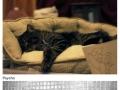 Film Scenes: Kitty Edition