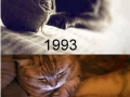 Cats before & after