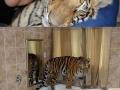 Cuz cats are too mainstream