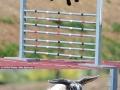 High Jump Rabbits