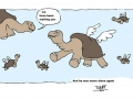 Lonesome George never again