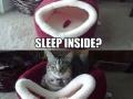 F**k you, I'm a cat!