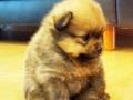 Sad Ewok Puppy