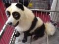 The Panda Dog