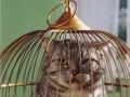 bird vs cat