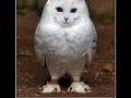 Meowl!