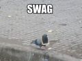 Just some SWAG