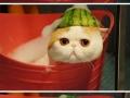 Melonhead taking a bath