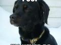 Dog Logic