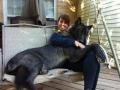 A huge hybrid wolf