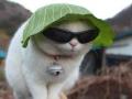 A cat in a lettuce hat
