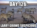 Zebras, zebras everywhere