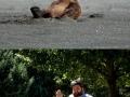 Like Man, Like Bear
