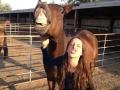 Introducing horse face