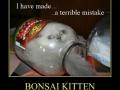 Bonsai Kitten