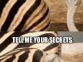 Oh, glorious zebra..