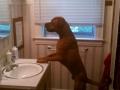 Hey dog, I'm handsome