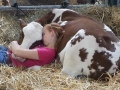 Napping with her cow