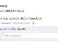 Stupid chameleon