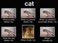 What cats are doing