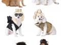 Celebrity dog costumes