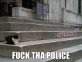 Criminal Cat