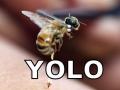 True meaning of YOLO