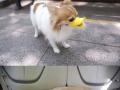 Duckface Protective Muzzle