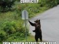 Good Guy Bear
