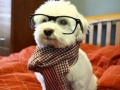 Hipster dog being hipster
