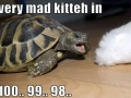Very mad kitty in..
