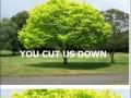 Last revenge of the trees