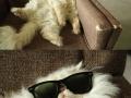 Cool cat chillin'