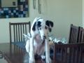 1st World Dog Problem