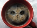 There's an owl in the coffee