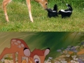 Bambi in real life