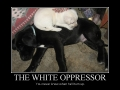 The White Oppressor