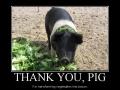 Thank you, pig!