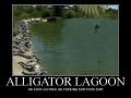 Alligator Lagoon