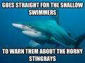 Poor Misunderstood Shark
