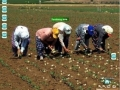 Real Life Farmville