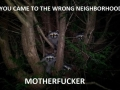 Angry Racoons