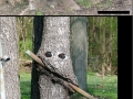 Hungry Trees